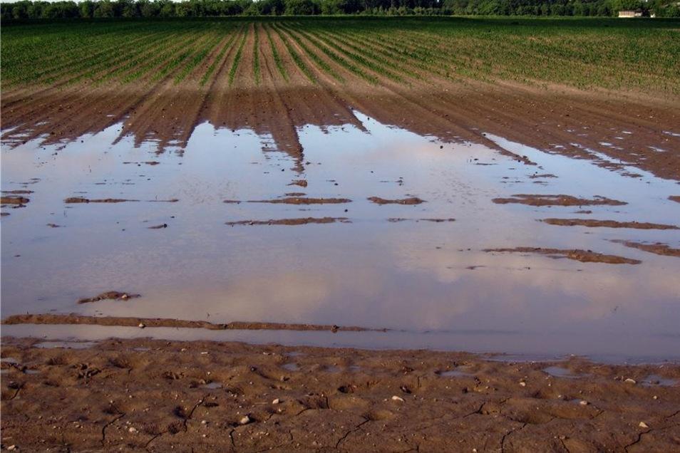 Das Foto zeigt ein vernässtes Feld, in dem die Drainagen, die das Wasser abführen, zerstört sind.