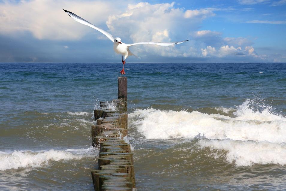 Ostseegefühl pur: rauschende Wellen und kreischende Möwen.