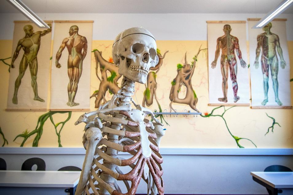 Das Biologiekabinett in der Roßweiner Oberschule hat eine treffende Wandgestaltung bekommen.