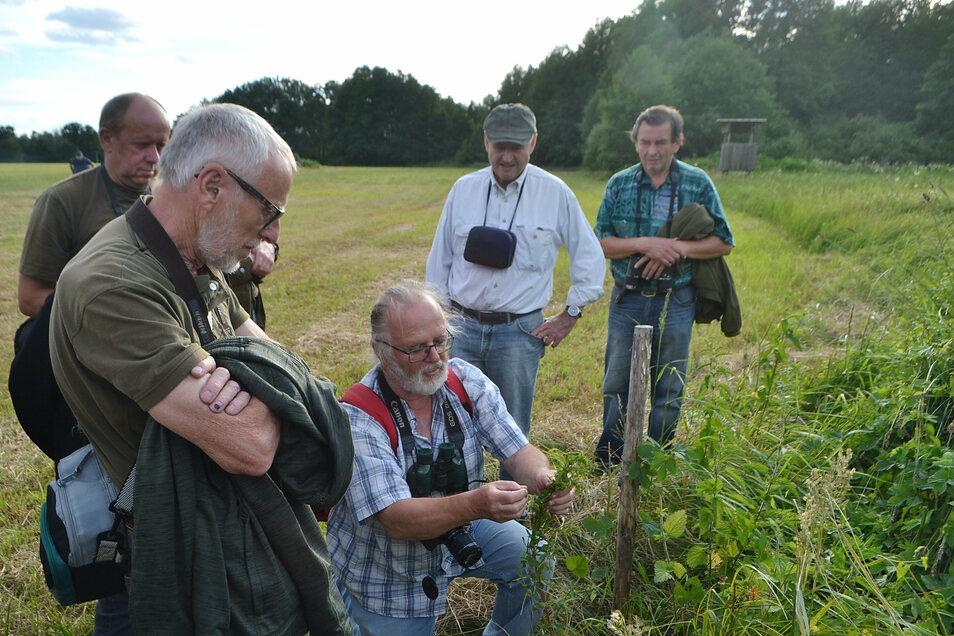 Botanik-Experte Dr. Dietrich Hanspach erklärt den Nabu-Exkursionsteilnehmern die Besonderheiten des Geflügelten Johanniskrautes.