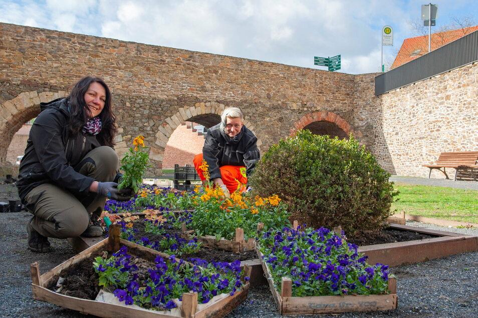 Die Stadt im Grünen ist nicht nur für ihre blumenreiche Bepflanzung durch Mitarbeiterinnen des Stadtbauhofes bekannt. Sie engagiert sich auch für die Sauberkeit Großenhains.