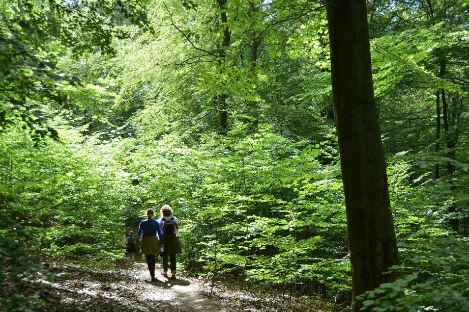 Symbolfoto: Frauen wandern durch den Wald.