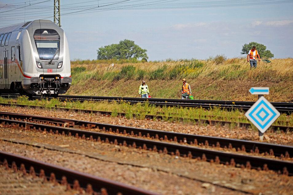Im Juni 2020 wurden an der Bahnstrecke bei Weißig noch Eidechsen gesammelt (Foto). Nun wird es dort laut - und zwar nachts.