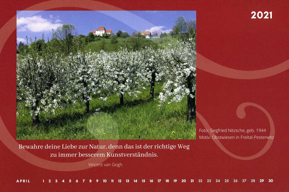 Auch viele Motive der grünen Umgebung Freitals finden sich im Kalender. Hier die Streuobstwiese in Freital-Pesterwitz.