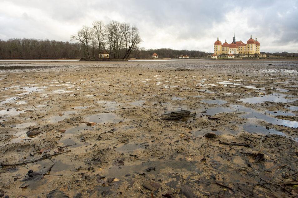 """Die westliche Seite des Moritzburger Schlossteichs sieht fast noch immer wie nach dem Abfischen Ende Oktober aus. """"Es ist einfach zu trocken"""", sagt Teichwirtschafts-Geschäftsführer Henry Lindner."""