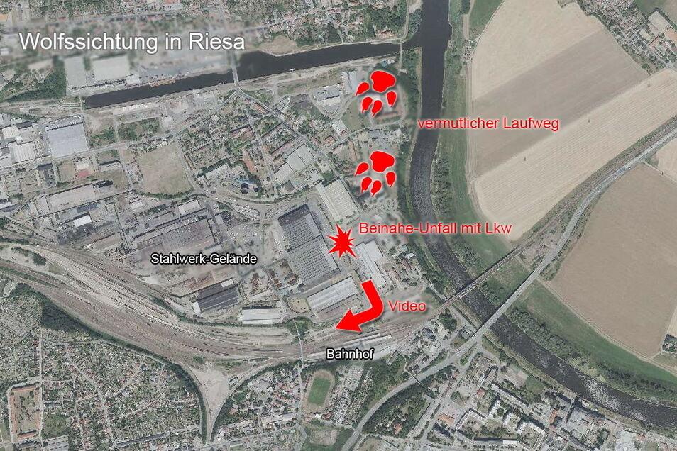Die Karte zeigt den Entstehungsort des Videos (Pfeil) und die Richtung, aus der das Tier vermutlich kam - um schließlich im Stahlwerksgelände zu verschwinden.