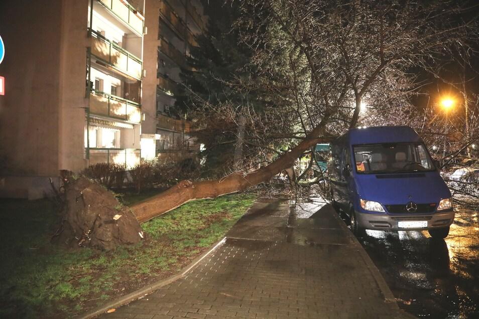 Auf dem Wölfnitzer Ring in Gorbitz brachte der Sturm einen Baum zu Fall.