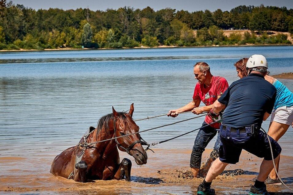 Mit vereinten Kräften wird das Pferd aus dem Kiessee gezogen.