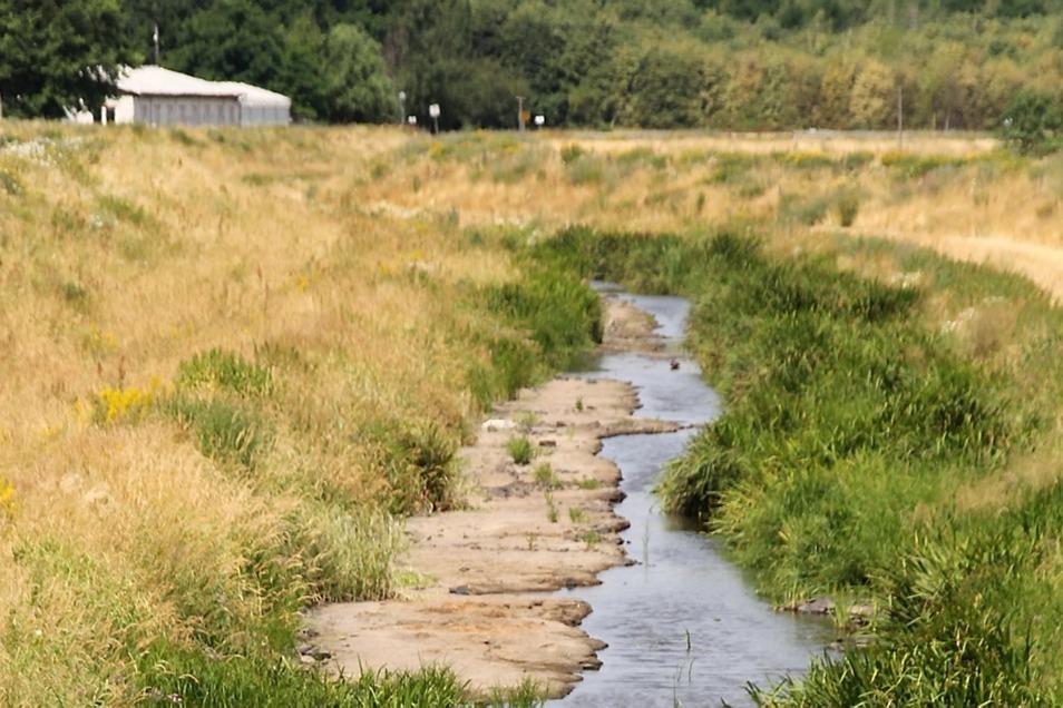 Hitze und Trockenheit sorgen dafür, dass die Schwarze Elster bei Neuwiese nur noch ein größeres Rinnsal ist. Die Wasserentnahme per Pumpe wurde Ende letzter Woche verboten. Gerade in solchen Trockenphasen bräuchte die Landwirtschaft das Wasser.