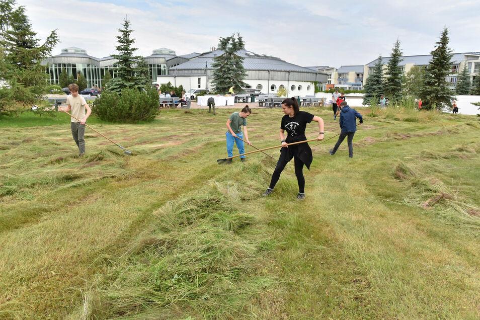 Zum Umwelttag harken Altenberger Gymnasiasten das Gras auf der Wiese an der Rehaklinik Raupennest zusammen.