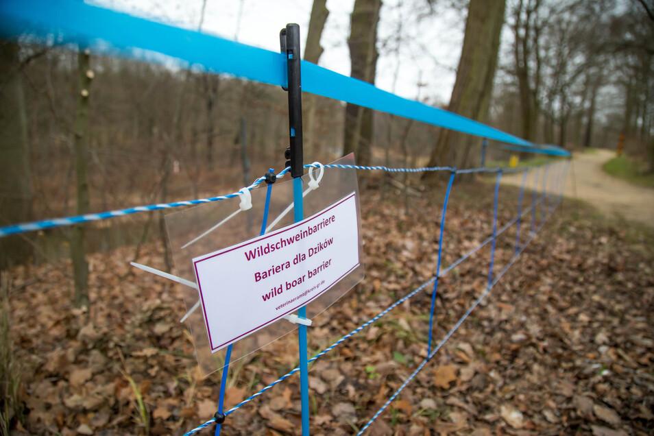 So sieht Schutzbarriere gegen die Afrikanische Schweinepest bei Bad Muskau im Landkreis Görlitz aus. Die Anlagen enthalten Elektronetze und spezielle Geruchsstoffe, die Wildschweine meiden.