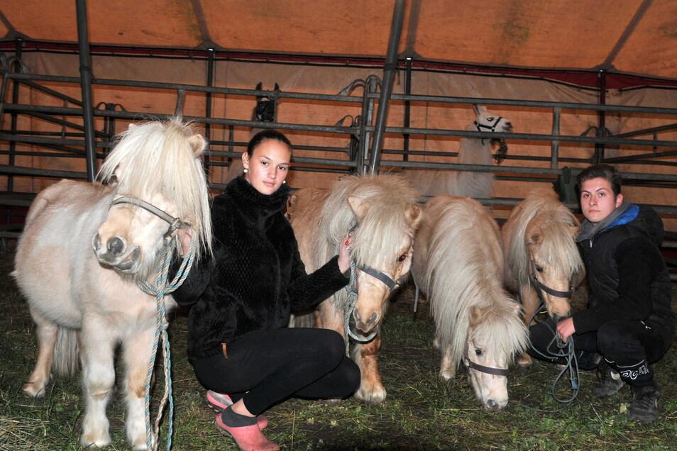 Dank der Spenden kommen auch die vier Ponys gut über den Winter.