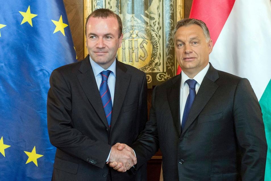 Viktor Orban (r), Ministerpräsident von Ungarn und Manfred Weber, Vorsitzender der Fraktion der Europäischen Volkspartei (EVP).