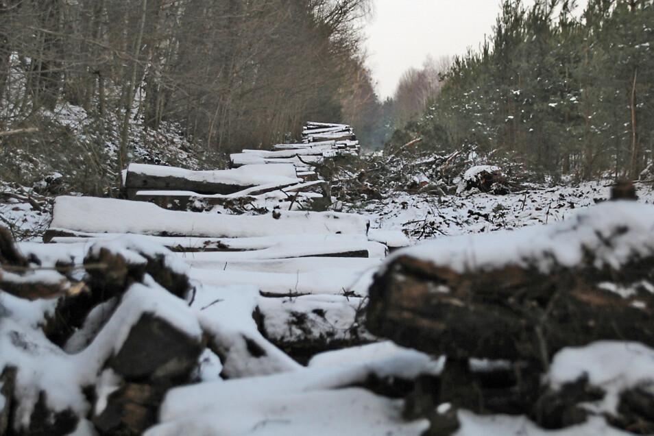 So sah es Anfang 2014 auf der Gleistrasse bei Zeißholz aus, kurz nachdem die letzten Schienen demontiert worden waren.