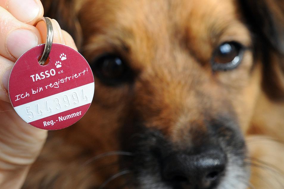 In anderen Bundesländern ist eine Versicherung für Hunde Pflicht. In Sachsen nicht.