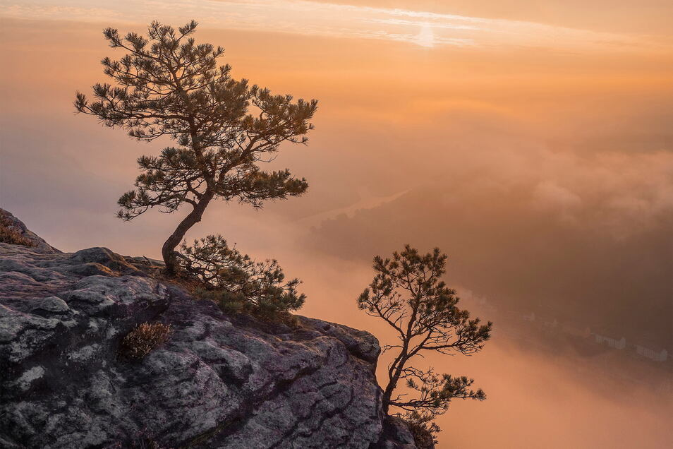 Wetterkiefern auf der Lilienstein-Ostspitze bei Sonnenaufgang. Im Nebel ist die Elbe bei Bad Schandau zu sehen. Entstanden ist das Foto letzten Herbst. Natürlich muss man dazu früh aufstehen und noch im Dunklen den Lilienstein erklimmen. Das Foto entschäd