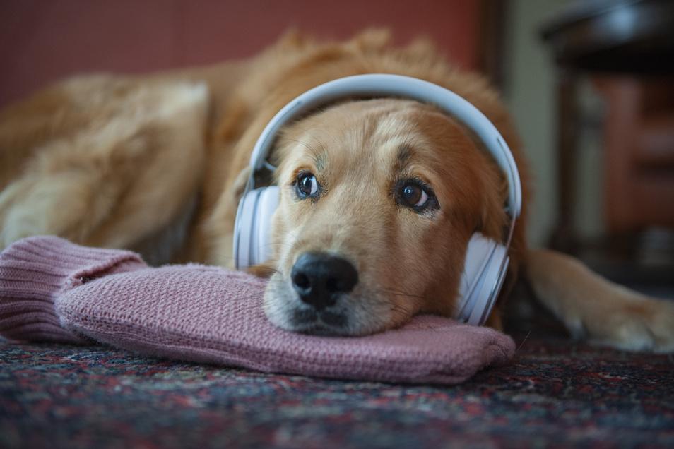 Für die meisten Hunde und Katzen ist der Jahreswechsel beinah unerträglich. Besitzer haben gut daran getan, sie von den lauten Geräuschen fernzuhalten.