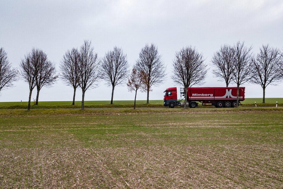 Das Schicksal der Linden zwischen Bockelwitz und Naunhof ist noch nicht besiegelt. Es sollen welche gerettet werden. Unklar ist, wie viele.