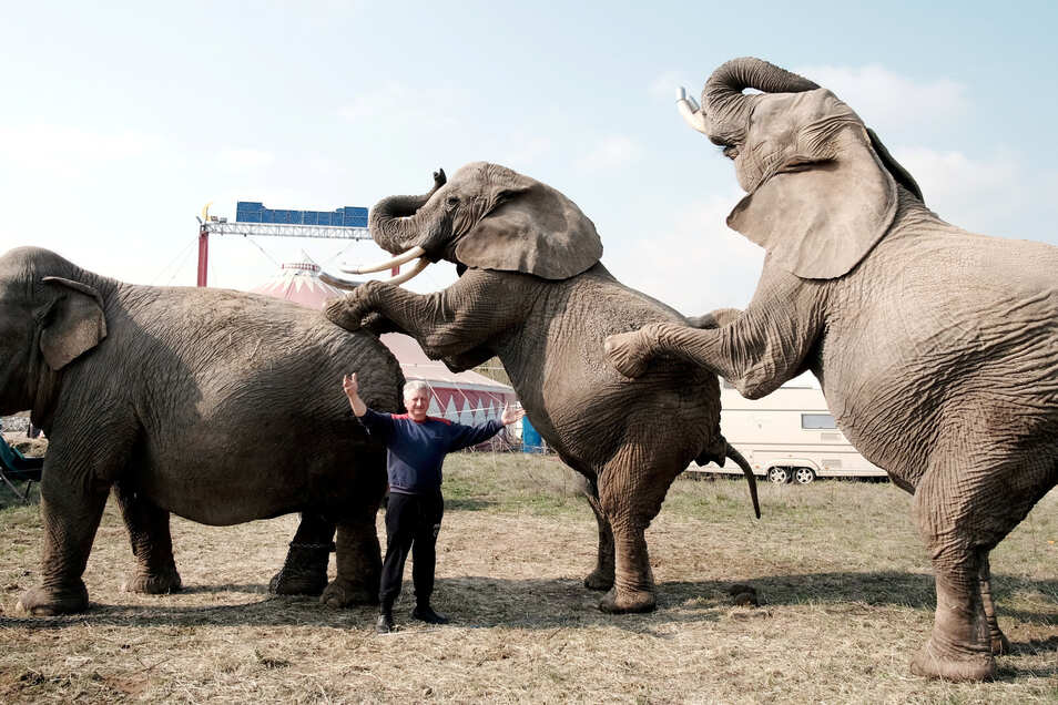 War erst Ende April in Meißen zu Gast: Circus-Afrika-Chef Hardy Weisheit mit seinen Elefanten. Jetzt soll ein Meißner einen der Futterwagen des Unternehmens angezündet haben.