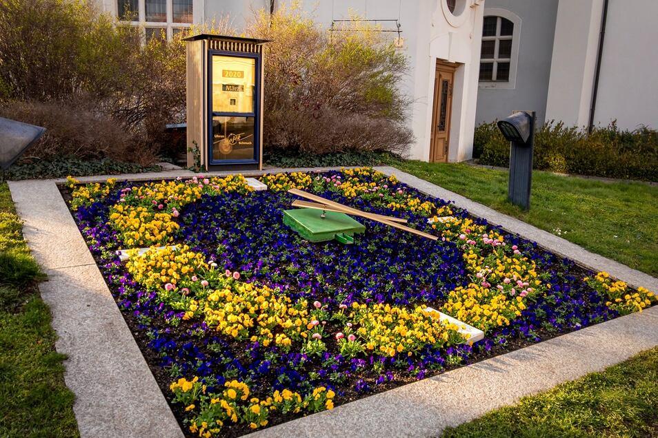 Die Blumenuhr an der Marienkirche wurde jetzt überholt und neu bepflanzt. Sie ist jetzt 60 Jahre alt!