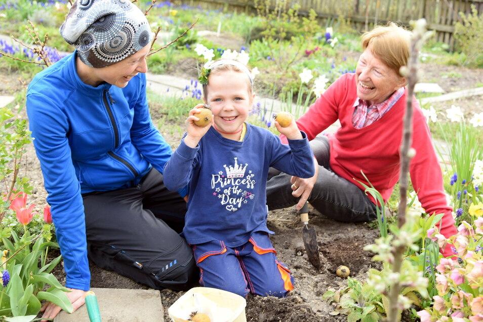 Gärtnern auf der Parzelle im Kleingartenverein ist bei allen Generationen beliebt.