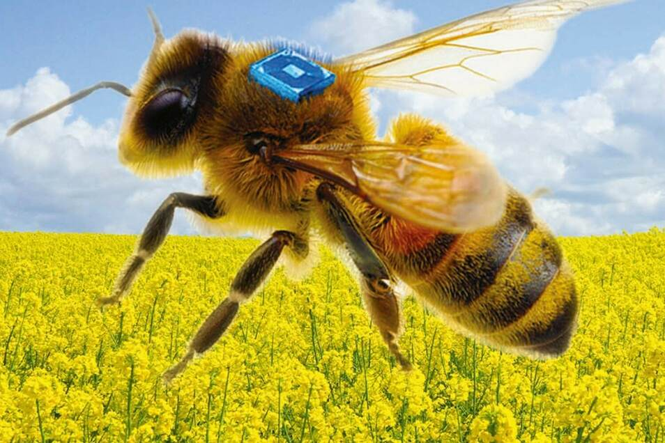 Ein Mikrochip mit Sensoren soll das Verhalten der Bienen nachverfolgbar machen.