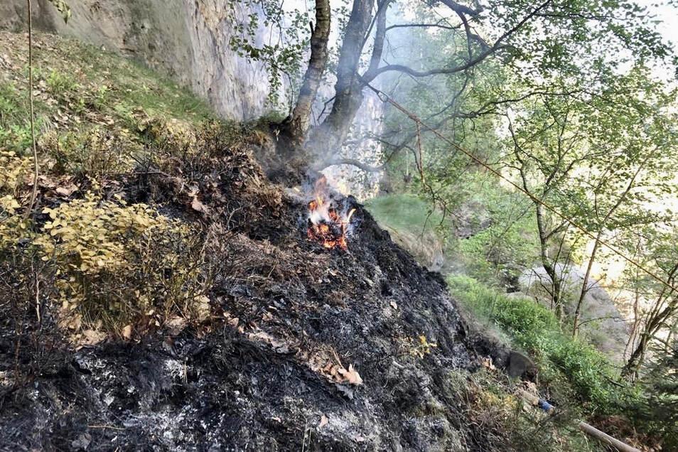 Das Feuer fraß sich durch die Vegetation.