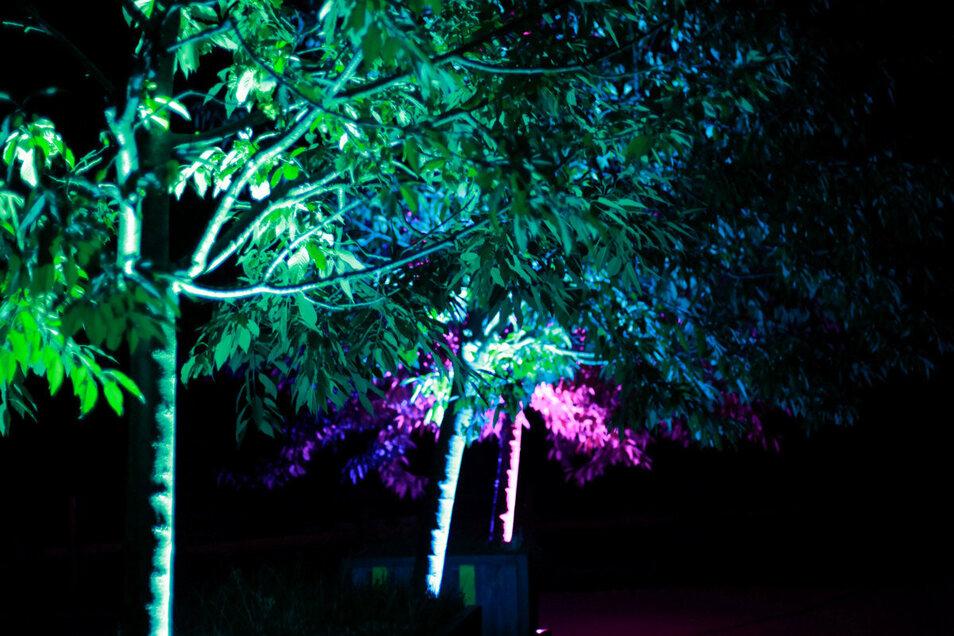 Ein Bild aus den Anfängen der Lichttests. Im November soll es noch viel spektakulärer werden.