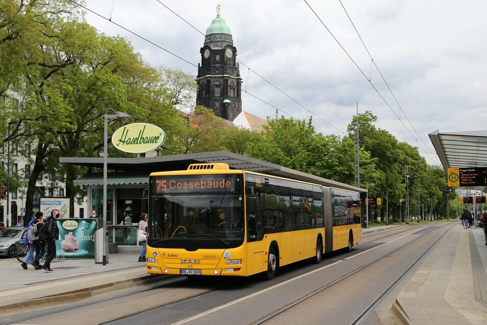 """Die Linie 75 wird ab September zwischen Leubnitz und Cossebaude auf einen 10-Minuten-Takt verdichtet und heißt dann """"68"""". Die Strecke vorbei am Rathaus bleibt unverändert. Auch dafür werden die neuen Busse benötigt."""