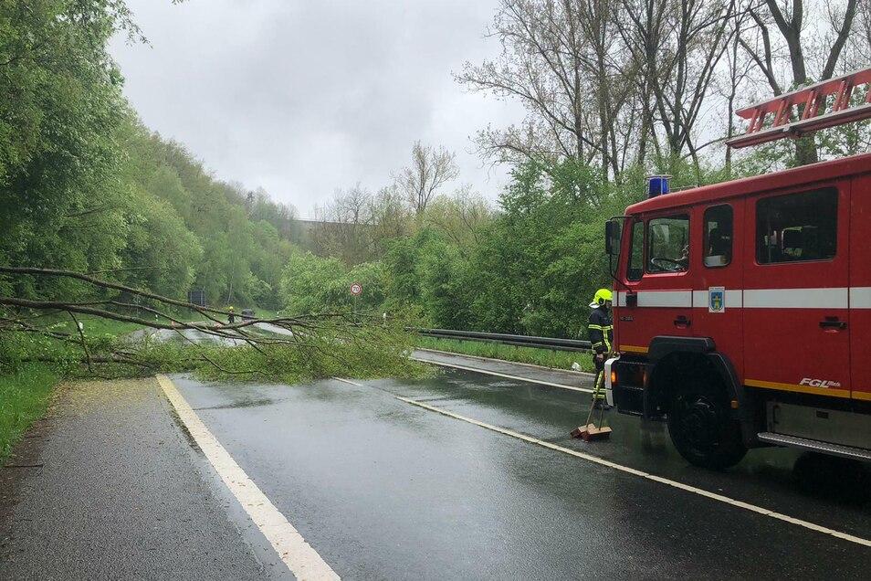Der Baum wurde von den Kameraden der Waldheimer Feuerwehr beseitigt.