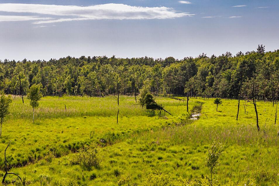 Der Vincenzgraben quert zwischen Scheckthal bzw. Dubring und Dörgenhausen das Dubringer Moor. Mitgeführte Schadstoffe lagern sich hier ab.