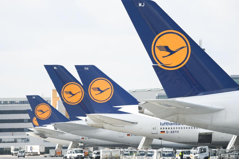 Lufthansa-Maschinen mit dem Kranich-Logo stehen am Frankfurter Flughafen.