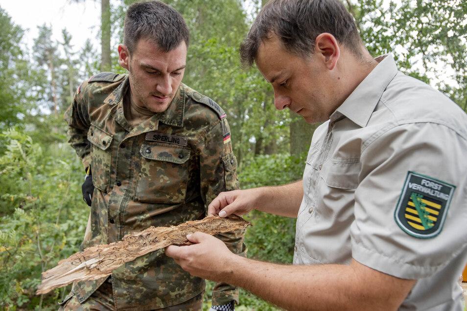 Revierförster Michael Blaß mit Bundeswehrsoldat Tobias Sperling: In diesem Sommer unterstützten Soldaten Waldarbeiter im Kampf gegen den Borkenkäfer.