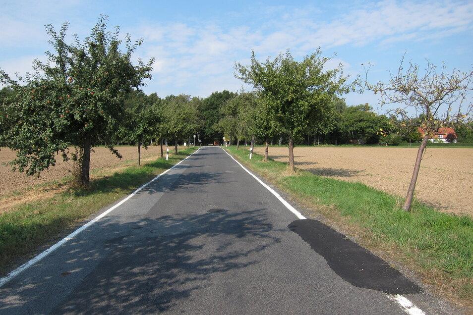 Die Kreisstraße zwischen Brösang und Seitschen im Jahr 2013 - mit Bäumen am Straßenrand.