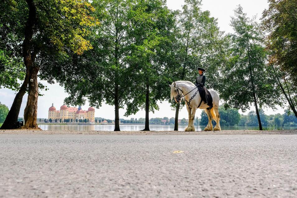 Am Sonnabend kommen rund 100 der imposanten Shire Horse nach Moritzburg.