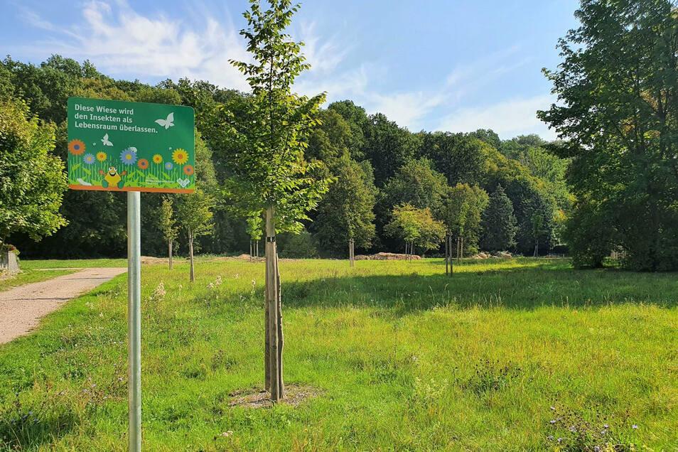 """Naturwiese am Wohnquartier """"An der Viehleite"""" in Pirna: Lebensraum für Pflanzen und Tiere."""