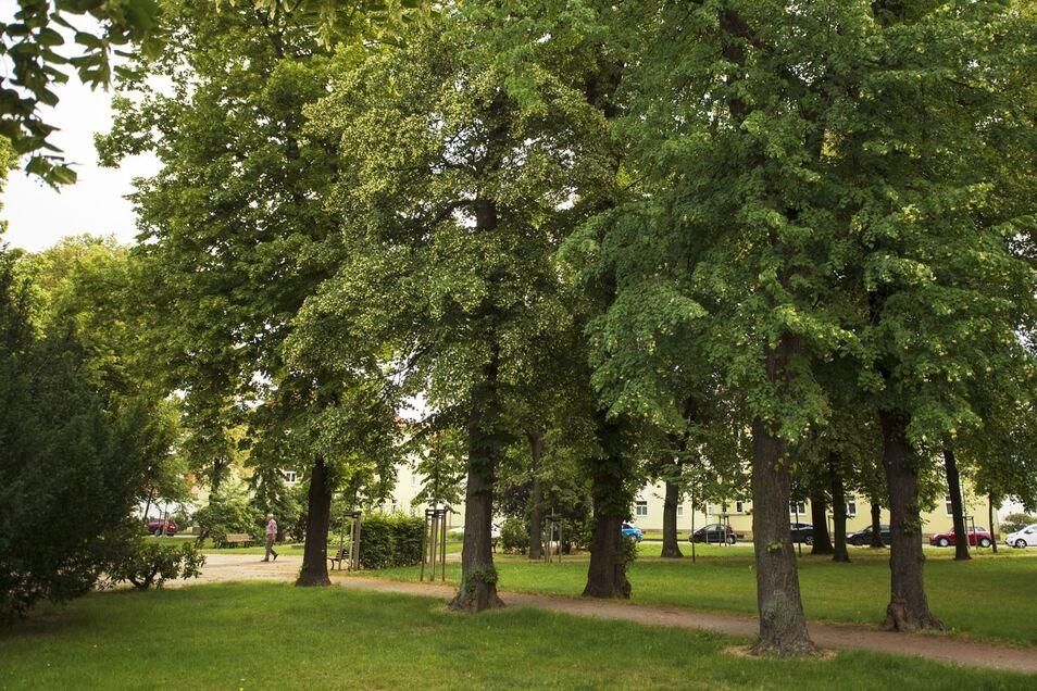 Alte und junge Bäume machen den Park an der Liebknechtstraße aus.