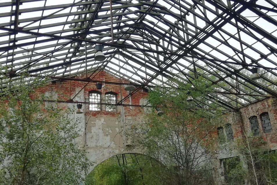 Die Natur erobert sich das Gelände des alten Glaswerkes zurück.