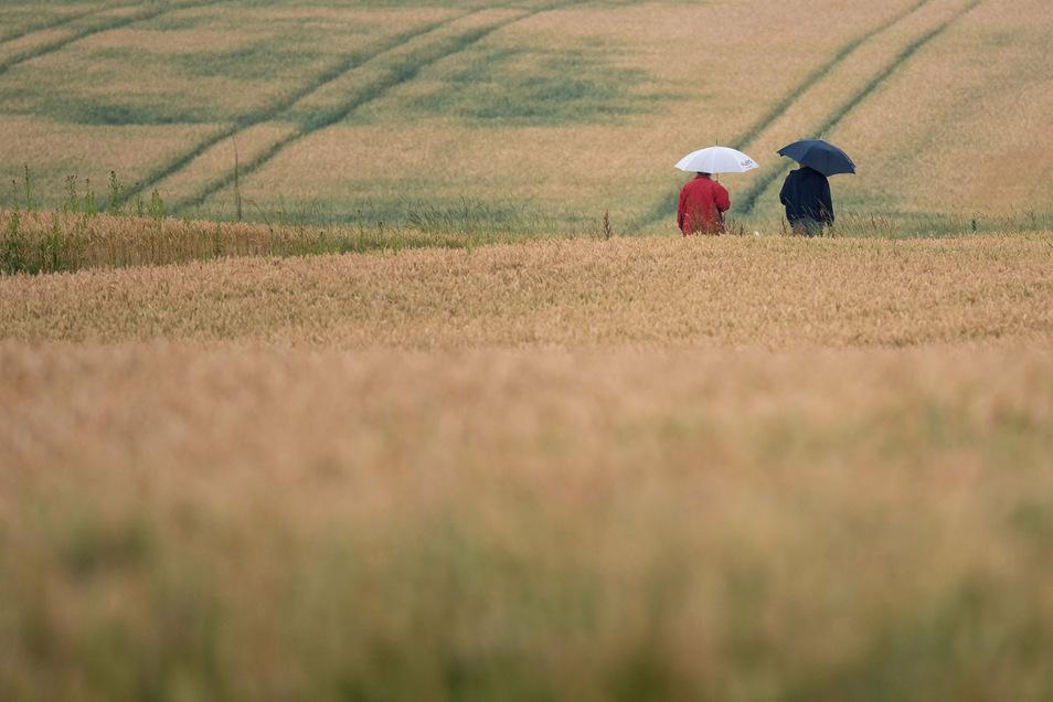 Zwei Spaziergänger gehen mit Regenschirmen zwischen Feldern.