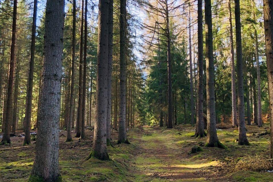 Tharandter Wald - ein bisschen wie im Märchenwald.