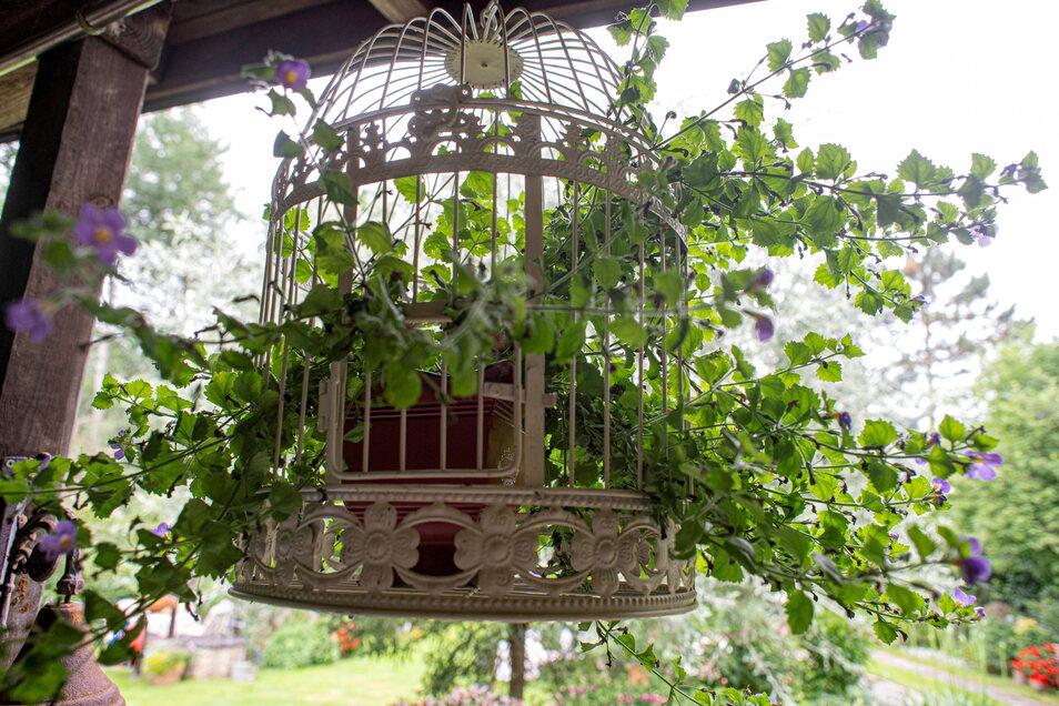 Alte Vogelkäfige wurde bepflanzt und zieren den Garten.