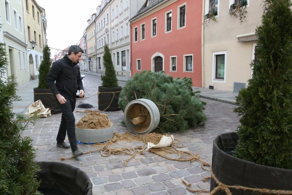 Tino Wunderlich vor der umgekippten Kiefer auf der Langen Straße: Unwahrscheinlich, dass der Wind den Baum umgeworfen hat.