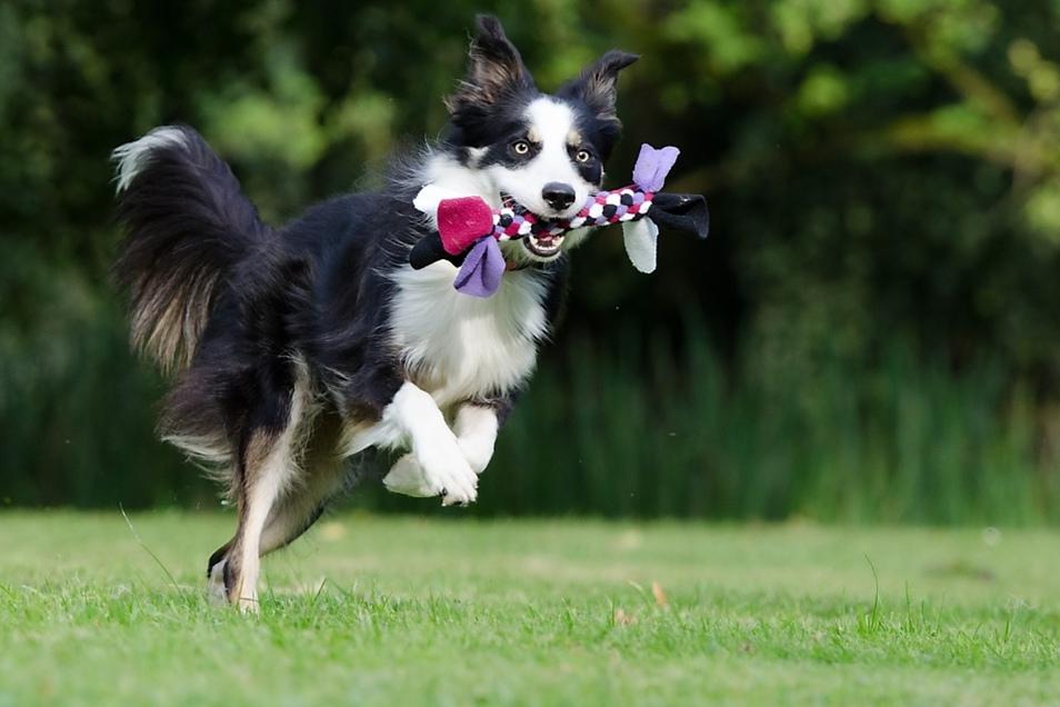 Nach Herzenslust herumtollen können sollen Vierbeiner bald auf einer städtischen Hundefreilauffläche.