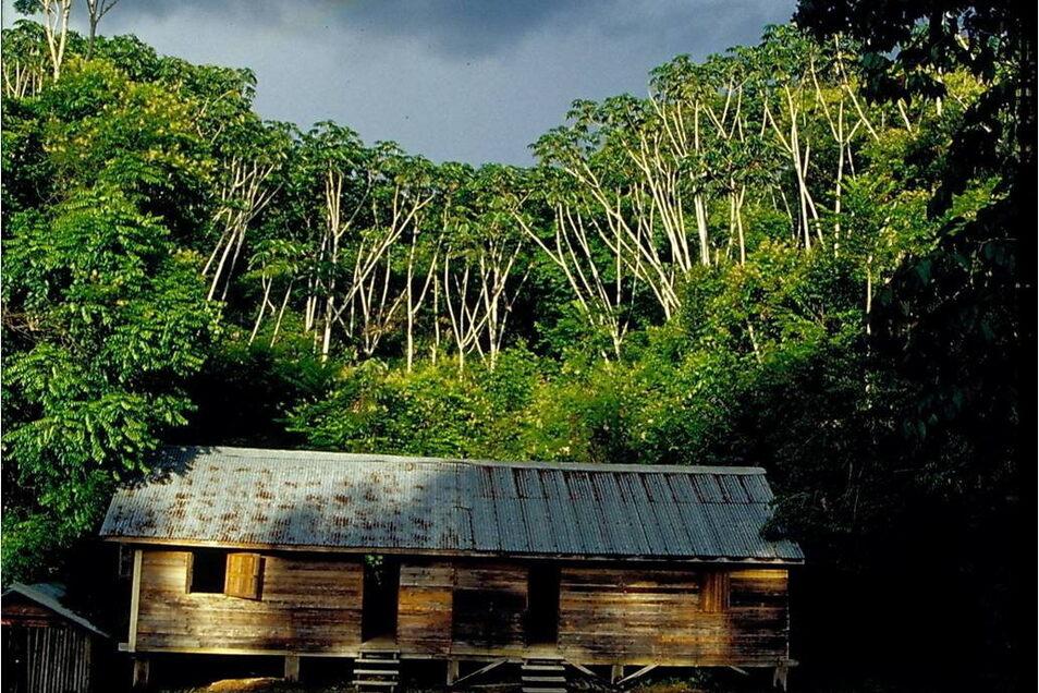 In der Forschungsstation Mabura Hill Forest Reserve in Guyana verbrachte der Dresdner Raffael Ernst von den Senckenberg Naturhistorischen Sammlungen Dresden zwei Jahre für seine Doktorarbeit.
