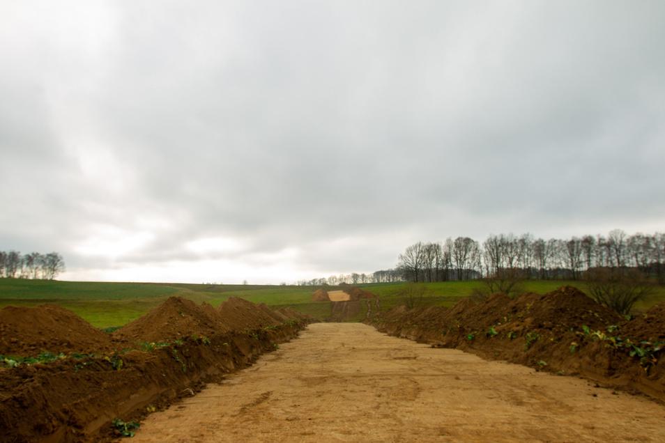 In den nächsten Tagen beginnen an Dresdens Ostumfahrung die Baumfällarbeiten.