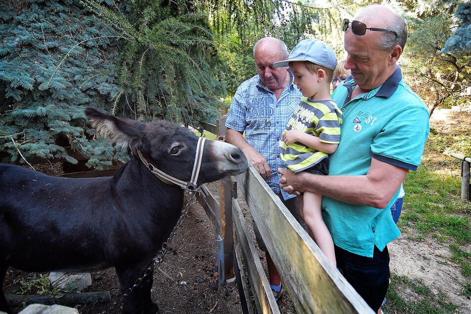 Jannik ist mit seinen beiden Opas Gerd Schulenborg und Wolfgang Taube zum Eselfest nach Reinsdorf gekommen.