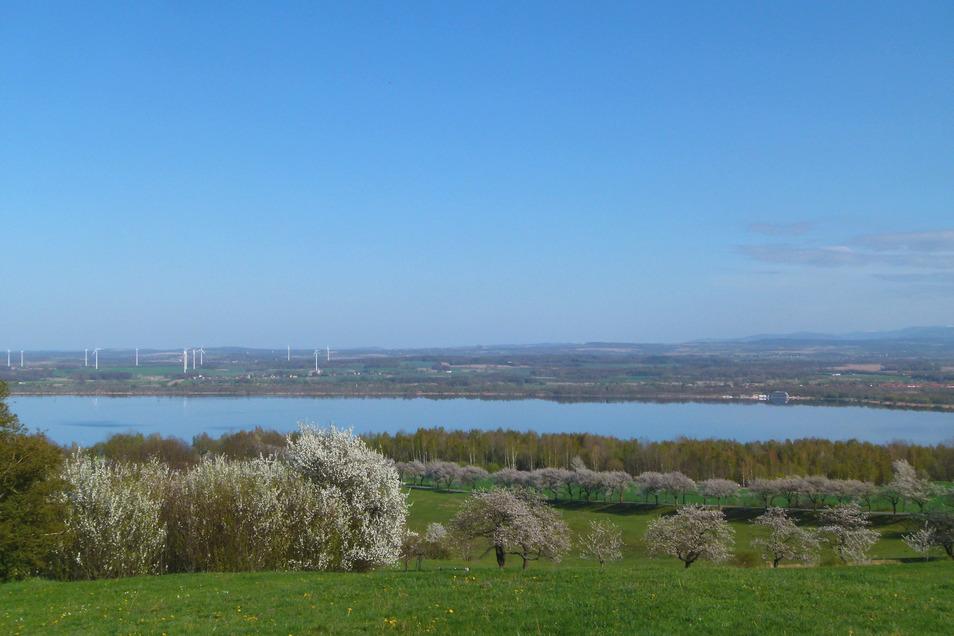 Blauer Himmel, milde Temperaturen. Letztere sorgten dafür, dass die Kirschallee in Jauernick-Buschbach in voller Blüte stand. Erste Anpflanzungen wurden bereits um 1940 vorgenommen, schreibt Ortschronist Joachim Lehmann zu diesem Bild.