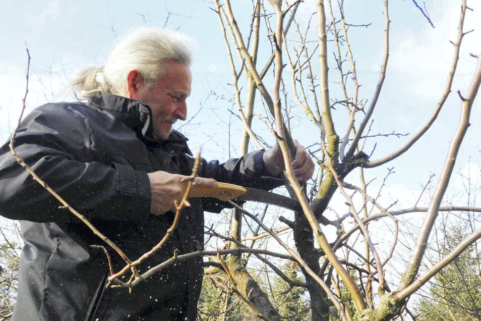 Jens Hofmann ist gelernter Baumschulgärtner und Gartenbauingenieur, leitete bis 2014 den Ostdeutschen Rosengarten Forst und bietet nun Gehölzschnitte nach den Gesetzen der Natur in Theorie und Praxis an. Das Angebot ist kostenlos, erfolgt wegen der Pand
