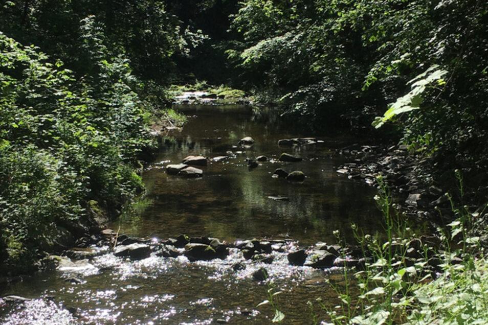 Die Wilde Weißeritz schlängelt sich durch das Tal.