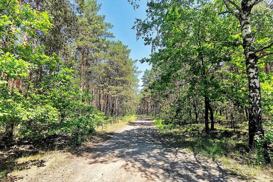 Waldgrundstücke in Lohsa OT Koblenz / Mindestgebot 96.000 Euro